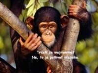 Majmunska posla – pps o oponašanju