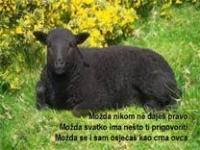 Crna ovca – pps