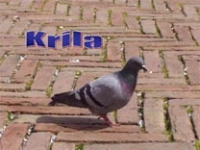 Krila – poučna priča pps